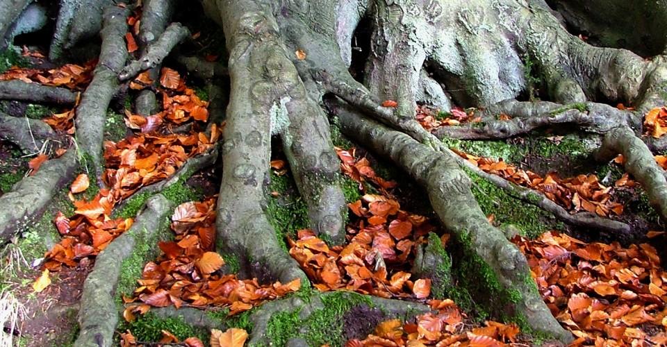 2013-09-04-treeroots.jpg