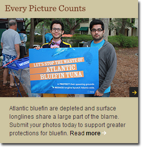 Every photo counts. Send a photo comment to NOAA on the bluefin rule
