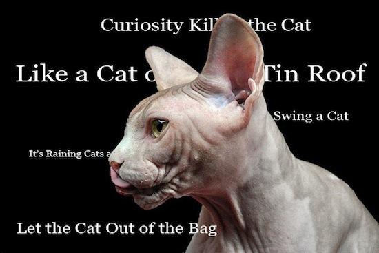 2013-09-09-Cat.jpg