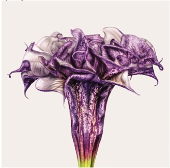 2013-09-15-flowerpic.jpg