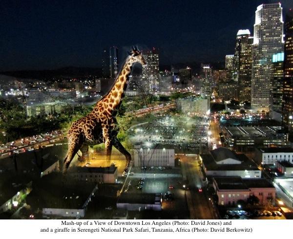 2013-09-17-HP_Giraffe_LA.jpg