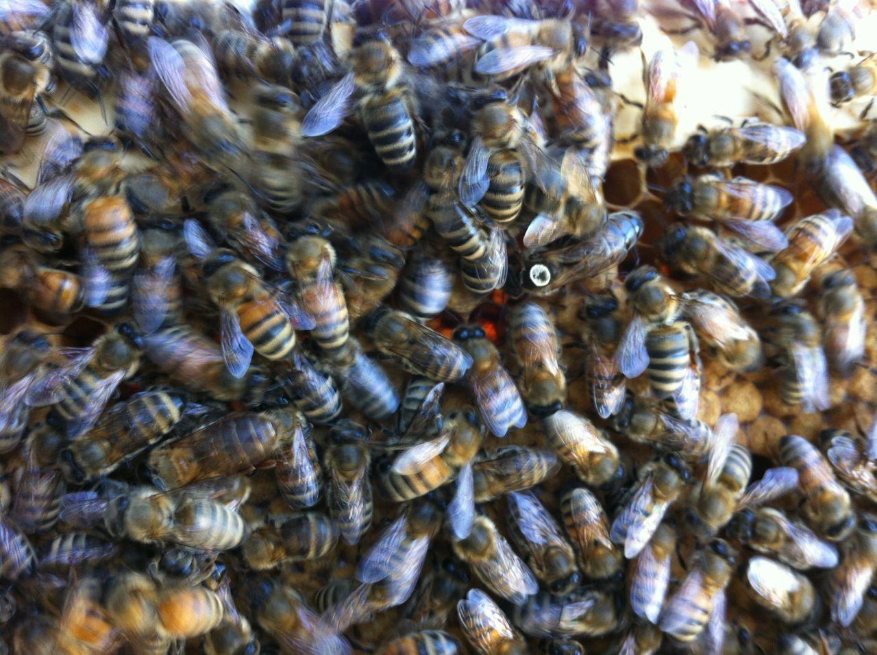 2013-09-17-honeybeeswithjack.jpg