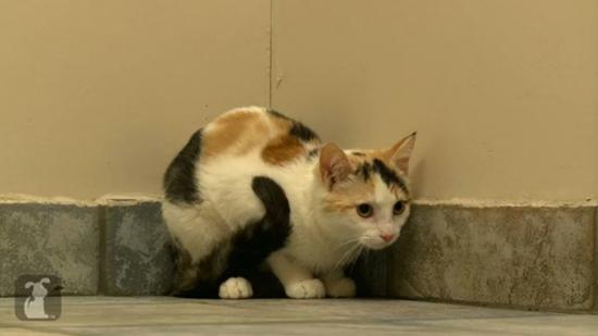 2013-09-22-catattackedbydogsurvives4.jpg