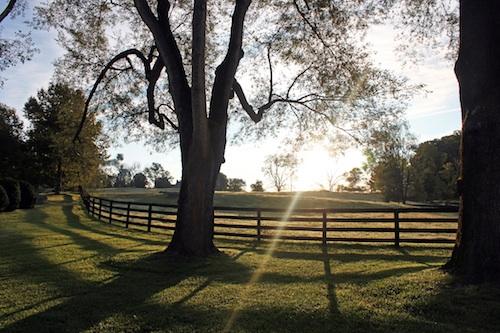 2013-09-25-Sunrise_treefencecopy.jpg