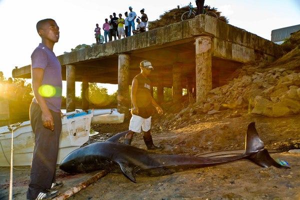 2013-09-26-IFAW_Madagascar_5830sonar.jpg