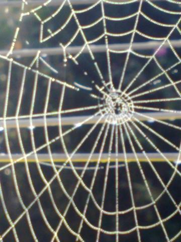 2013-09-26-Spiderswebagainstgunwithdetail.jpg