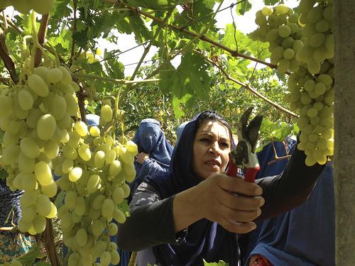 2013-09-30-afghanwomanfarmer.jpg