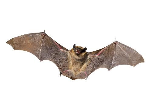 2013-09-30-bat.jpg