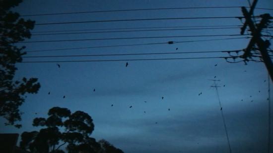 2013-10-02-bats.jpg