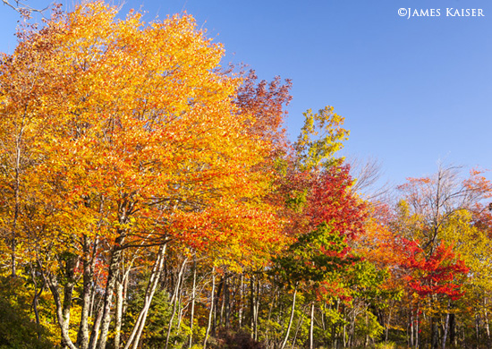 2013-10-03-AcadiaFoliage550Kaiser.jpg