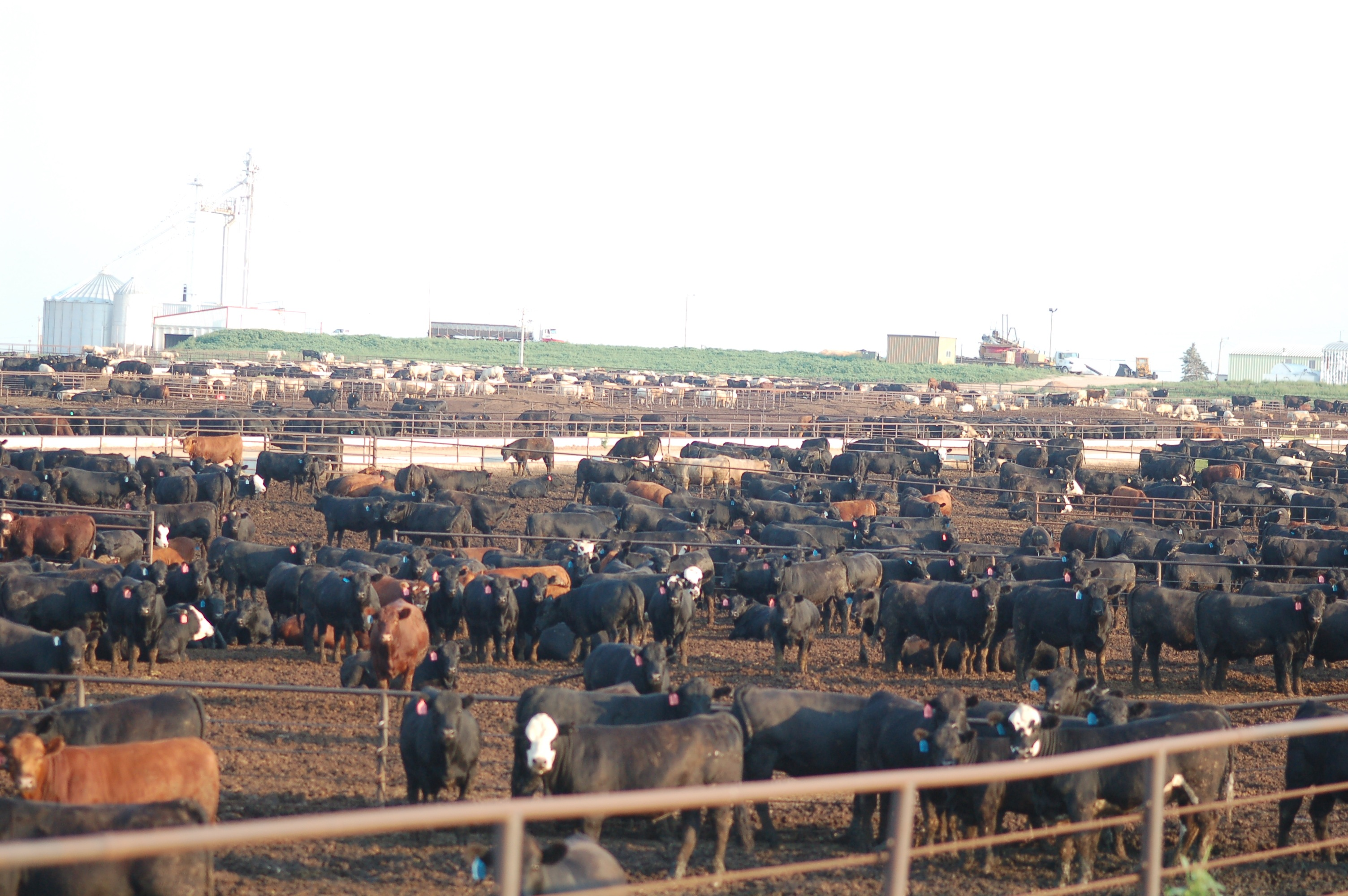 trenbolone for livestock