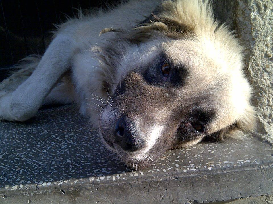 2013-10-03-doggy5.jpg