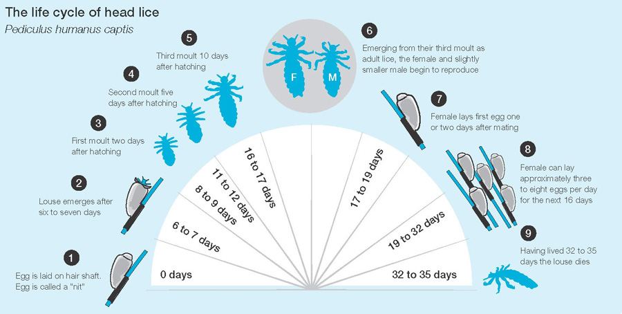 Lice: The New Four-Letter Word | HuffPost - photo#9