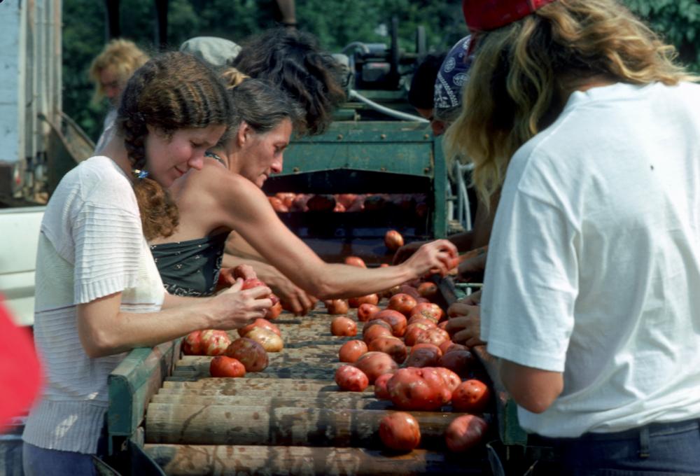 2013-10-04-potatoharvest.png