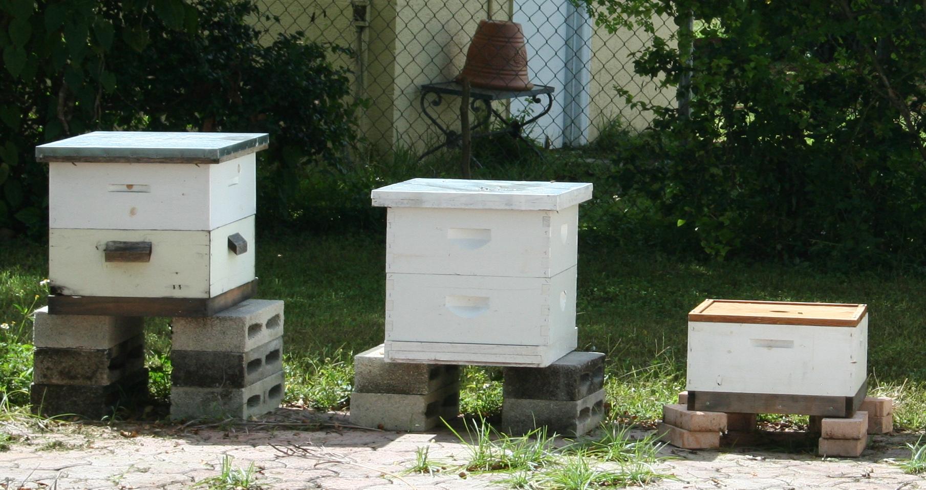 2013-10-05-beehives.JPG