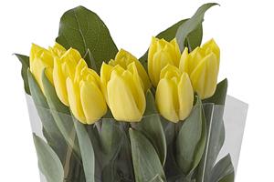 2013-10-08-SPB_tulip_greens_10.jpg