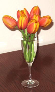 2013-10-08-Tulip03.jpg