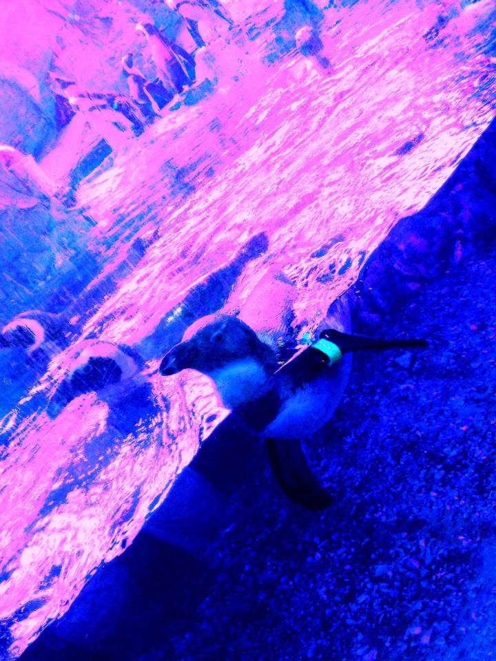 2013-10-08-blackout02.jpg