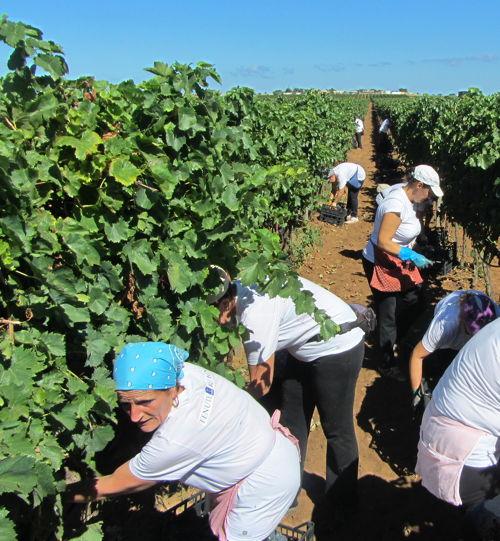 2013-10-10-harvesterspicking.JPG