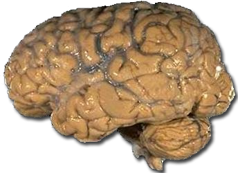 2013-10-14-brain.png