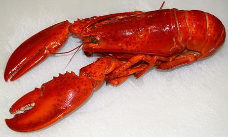 2013-10-16-lobstercookedHomarus_americanuscreditSvenKullanderatwikimediacommons_resize.jpg