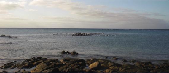 2013-10-21-arrecife.png