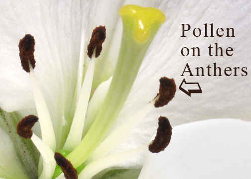 How To Remove Pollen Stains Huffpost Life
