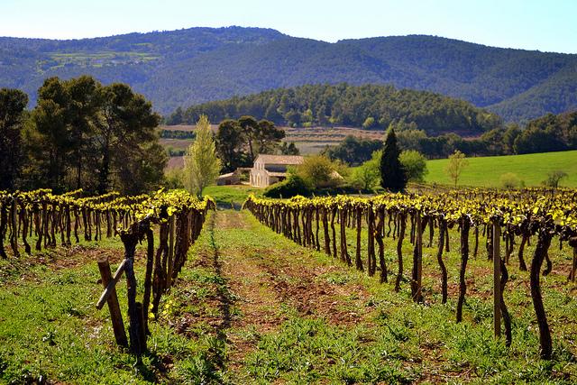 El Penedès Vineyards