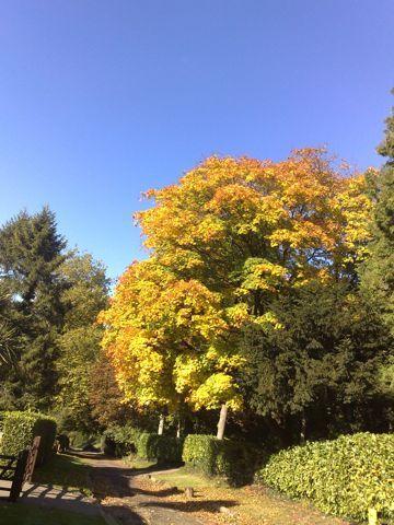 2013-10-24-AutumnbeechLongHill.jpg