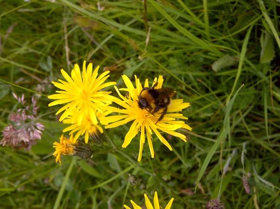 2013-10-24-beeonyellowflower.jpg