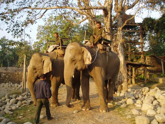 2013-10-25-elephants.jpg