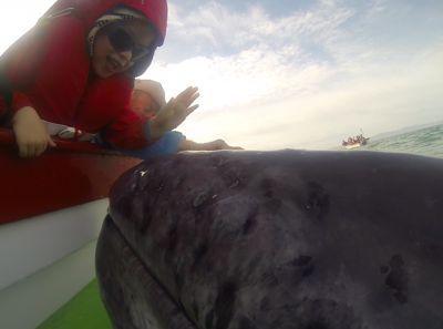 2013-10-26-babywhale.jpg