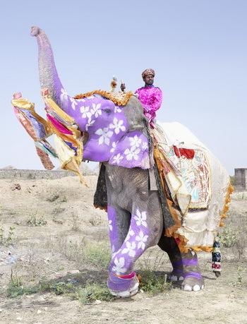 2013-10-26-elephant_freger.jpg