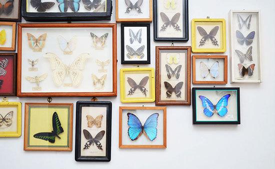 2013-10-28-butterflies.jpg