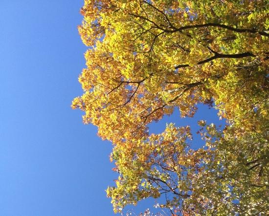 2013-10-28-fallcolor.JPG
