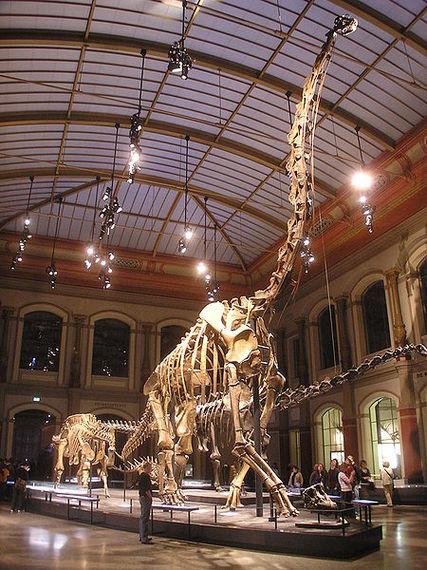2013-10-29-450pxNaturkundemuseum_Brachiosaurus_brancai.jpg