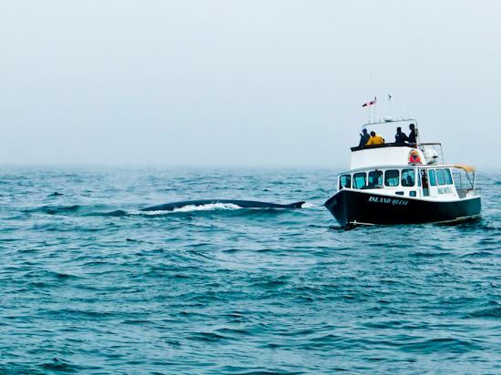 2013-11-01-FinWhaleandboat.jpg