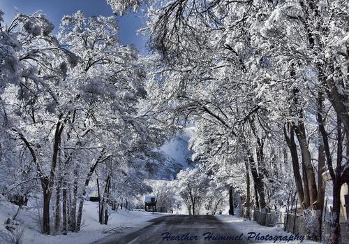 2013-11-02-ColoradoSnowstormTreelinedRoadHeatherHummel.jpg