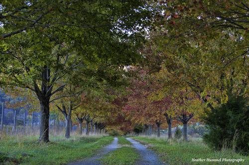 2013-11-02-WintergreenFoliageCanopyHeatherHummel.jpg