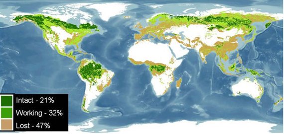 2013-11-06-currentglobalforestdistributionbyWorldResourcesInstitute.jpg
