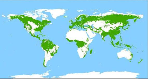 2013-11-06-historicglobaldistributionofforestsbyworldresourcesinstitute1997.jpg