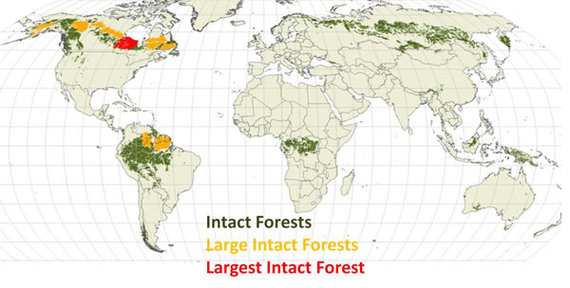2013-11-06-remainingintactforestbyCanadianBorealInitiative2009.jpg