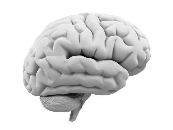 2013-11-07-Brain.jpg