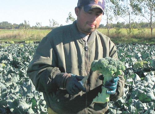 2013-11-07-Broccoli.jpg