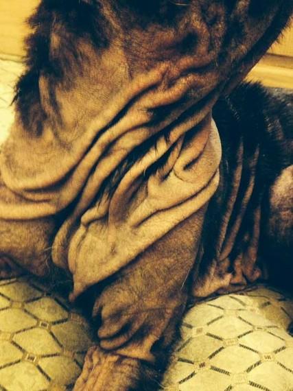 2013-11-08-violalabradormange2.jpg