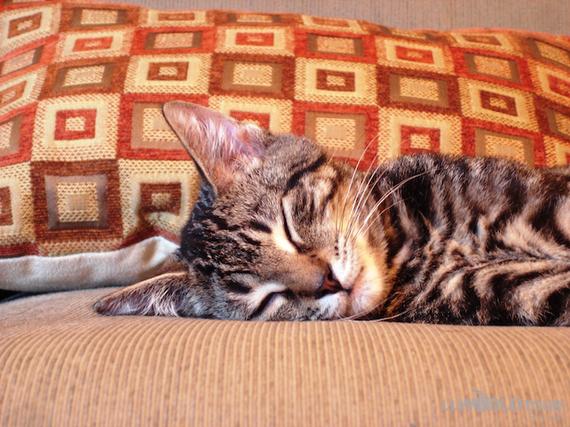 2013-11-09-KittySleeps.jpg