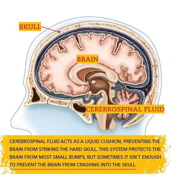 2013-11-10-brain.jpg
