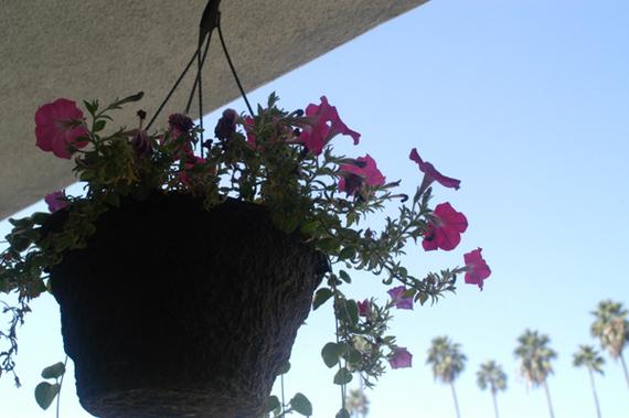 2013-11-10-flowers.jpg