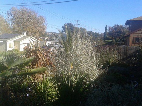 2013-11-10-garden1.jpg
