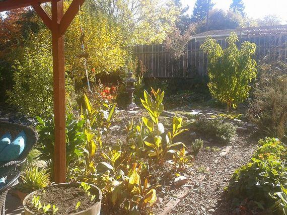 2013-11-10-garden2.jpg